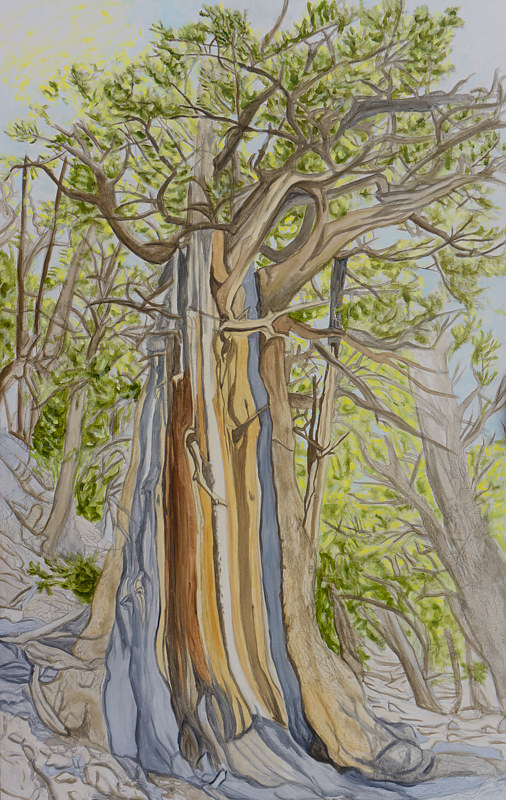 Oil painting My Favorite Tree by Crystal Dipietro