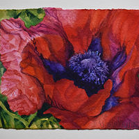 Watercolor Poppy 3 by Lisa  Baechtle