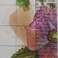 Watercolor Rambling in the Wild Roses- full rose (left) by Sarah Peschell