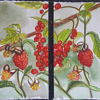 Watercolor Raspberry Red Currant Jelly by Sarah Peschell