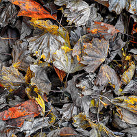 """Dead Leaf Composition"" by Hunter Madsen"