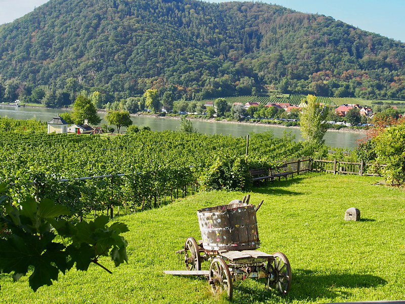 Durnstein Vines by Ann Williams