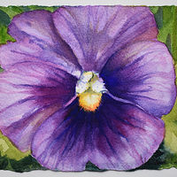 Watercolor Lavender Pansy by Lisa  Baechtle