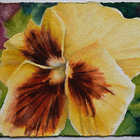 Watercolor YellowPansy copy by Lisa  Baechtle
