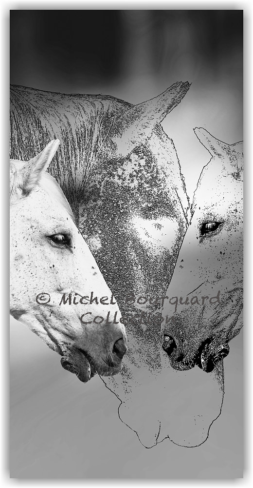 Horses by Michel Bourquard