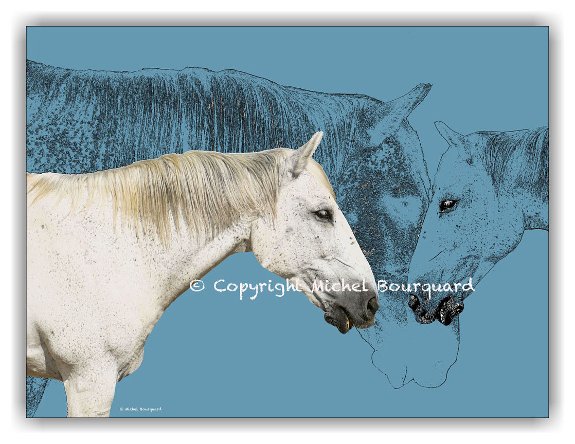 2 White Horses and the blue horses shadows by Michel Bourquard