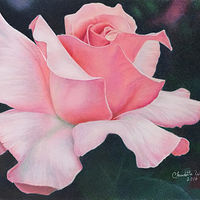 Drawing Pink Rose by Claudette Webb