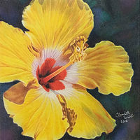 Drawing Hibiscus by Claudette Webb