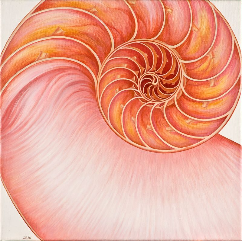 Oil painting Rose Nautilus by Sue Ellen Brown