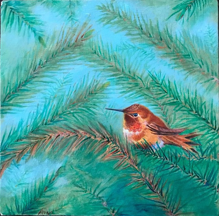 Hummingbird in Fir Forest by Anya Doll