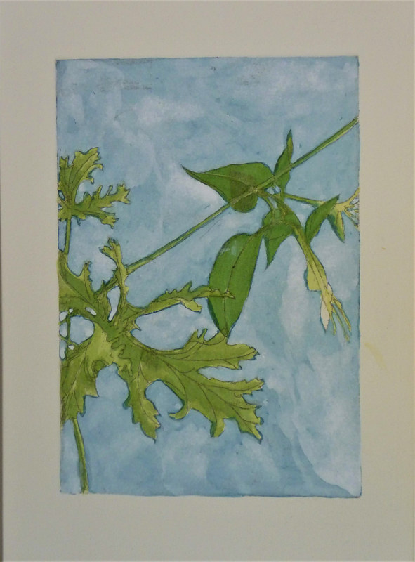 Watercolor Geranium & Honeysuckle by Mary Crockett