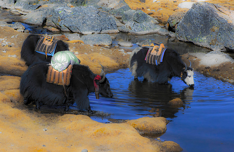 Yaks Drink the Deep Blue Sky by Hunter Madsen