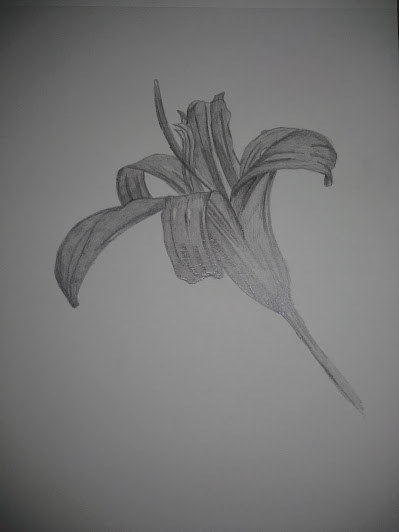 Drawing Flower in Graphite from Campus by Matt Kantor