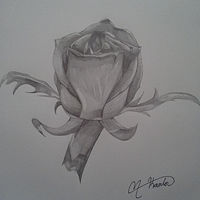 Drawing Rose in Graphite by Matt Kantor