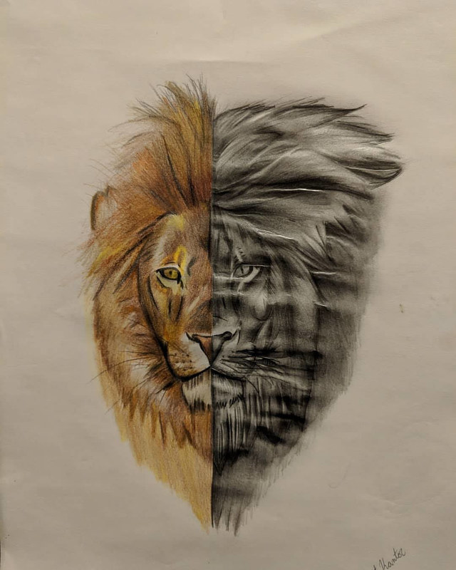 Drawing Lion Head by Matt Kantor