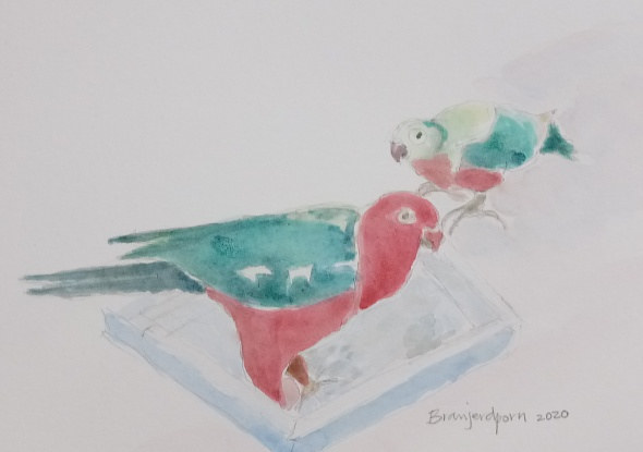 Watercolor Mother Australian King Parrot and her baby by Gwenda Branjerdporn