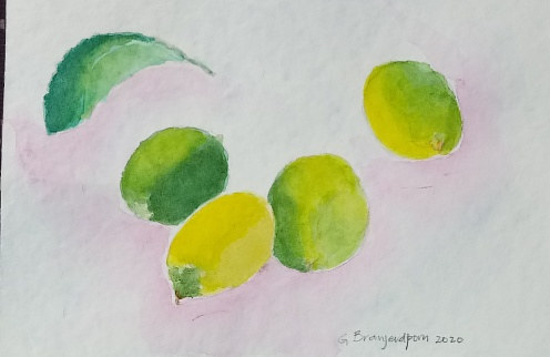 Watercolor Four Limes and a Lime Leaf by Gwenda Branjerdporn