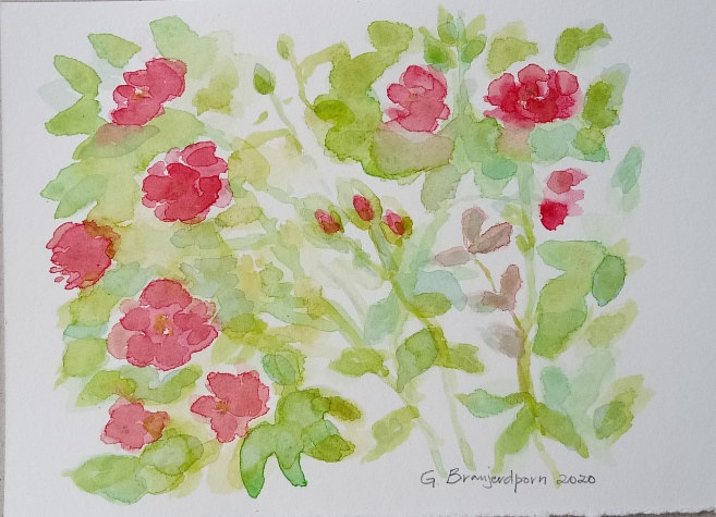 Watercolor The Rose Bush #3 by Gwenda Branjerdporn