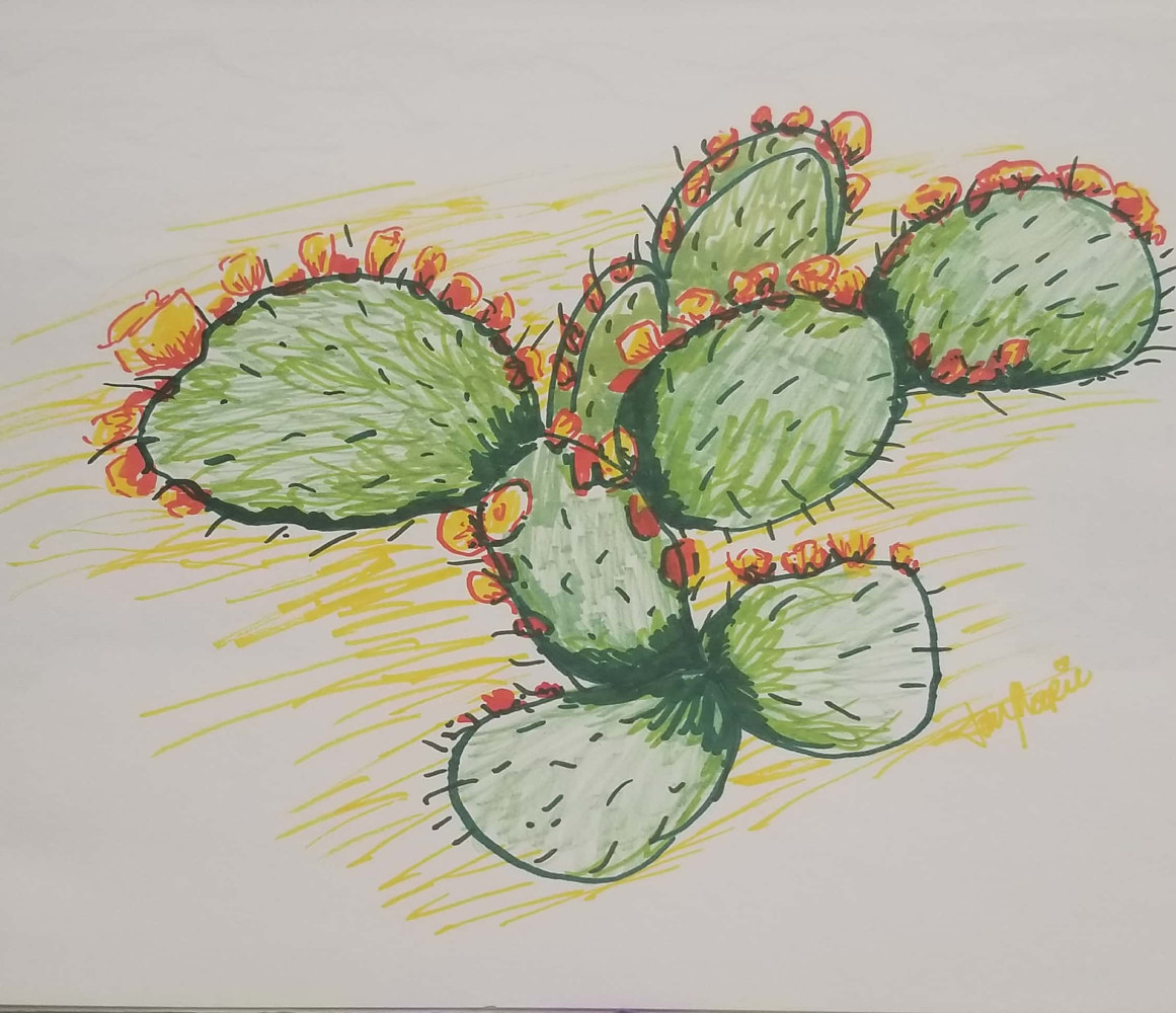 Drawing Prickly Cactus by Jan Wirth