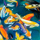 Oil painting Friday Fish XVII by Raymond Noesen