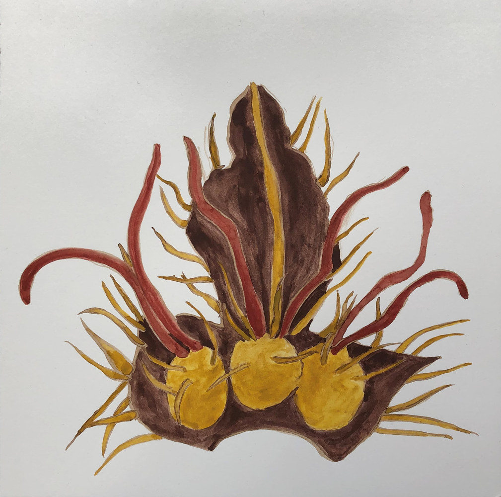 Drawing Botanical Study 1 by Pamela  Speight