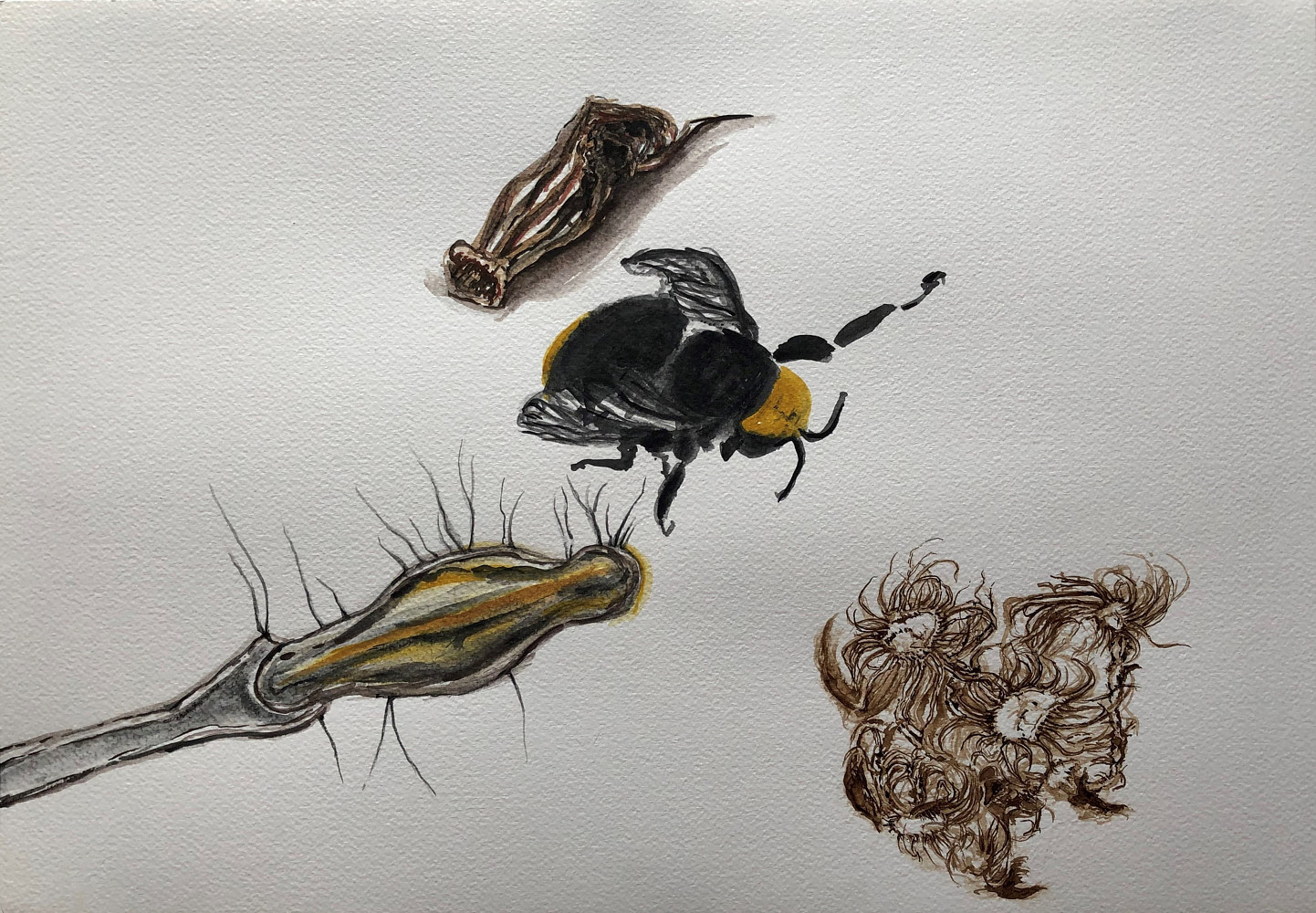 Drawing Biology Study by Pamela  Speight