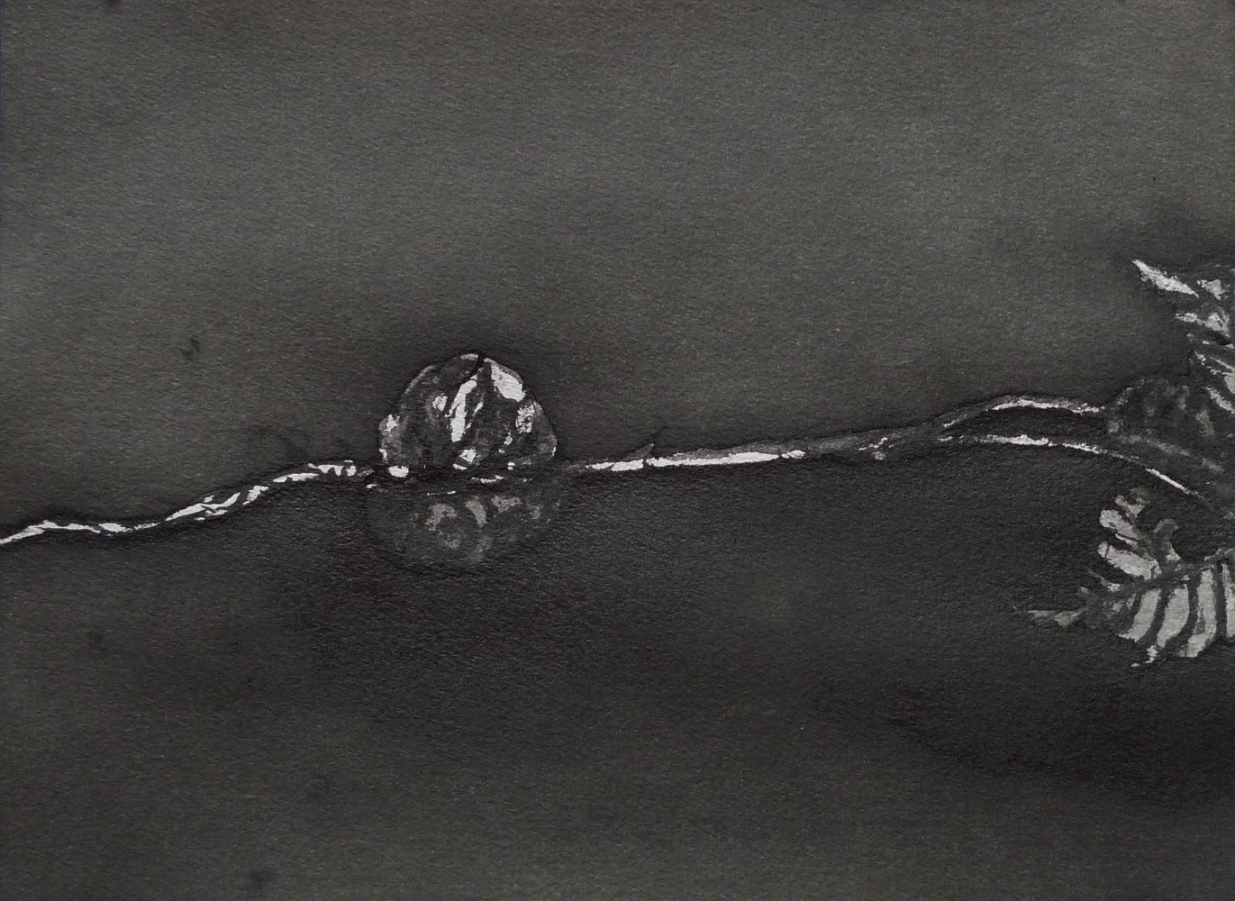 Drawing Study in Brush and Ink 3 by Pamela  Speight