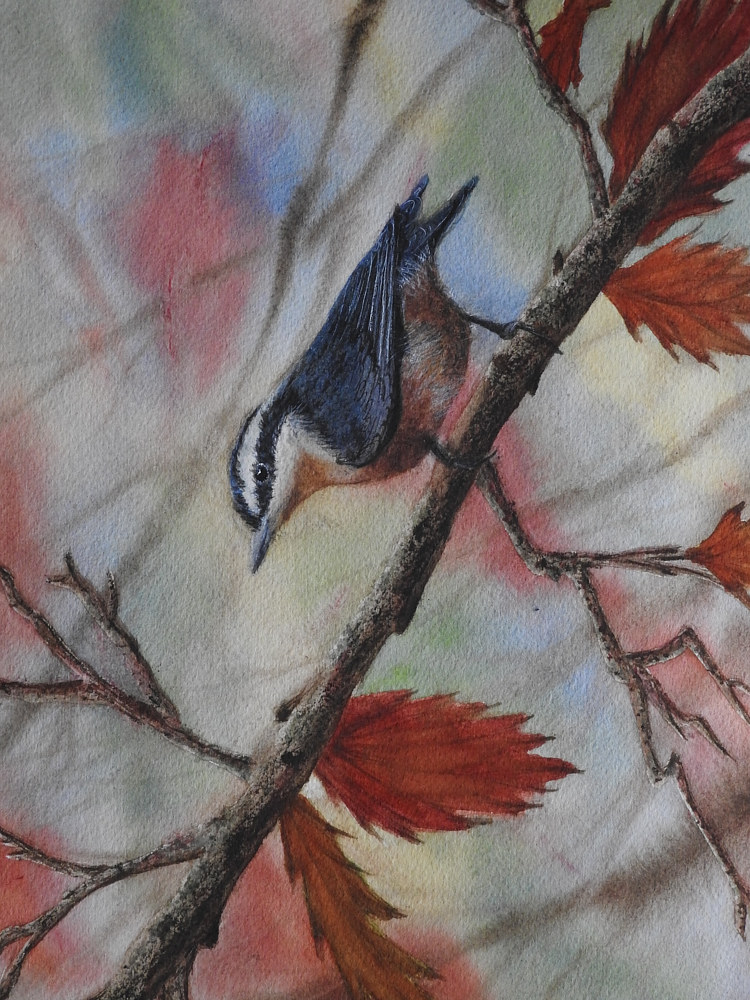 The Nuthatch by Vicki Allesia