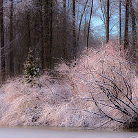 """Coquitlam Riverbank in Late Snow"" by Hunter Madsen"