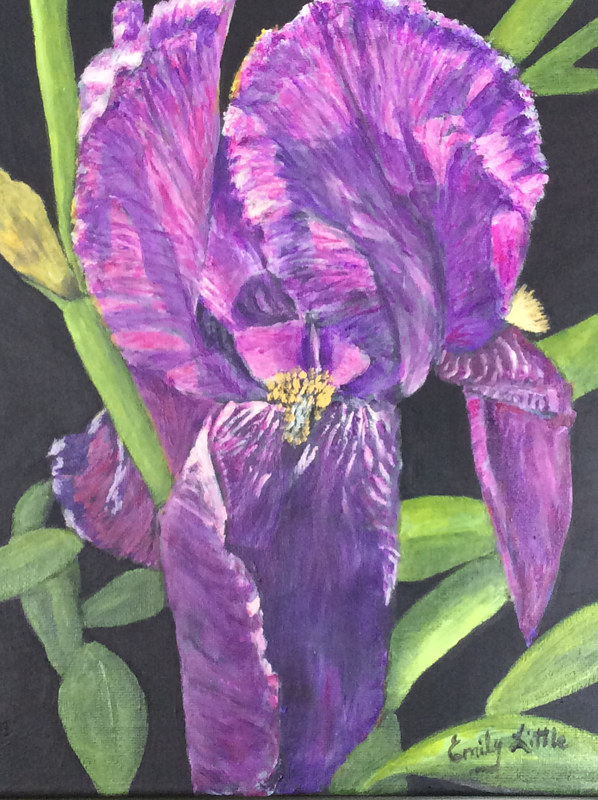 Acrylic painting My Iris by Emily Little by Passionate Painters
