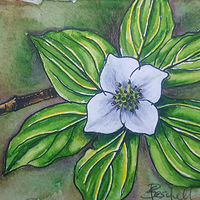 Watercolor Creeping Dogwood by Sarah Peschell