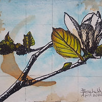 Watercolor Magnolia by Sarah Peschell