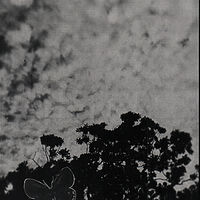 Photography photogram 8 by Amber Macgregor