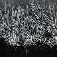 Drawing Boreal Marsh by Pamela  Speight
