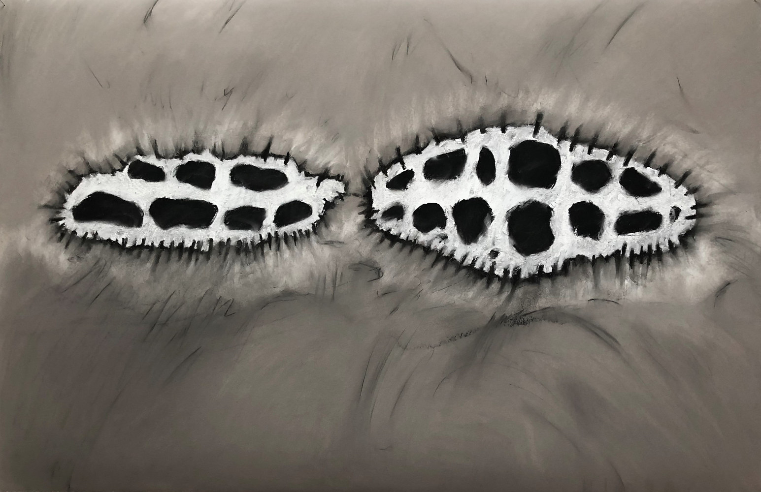 Drawing Dorsal Papillae 2 by Pamela  Speight