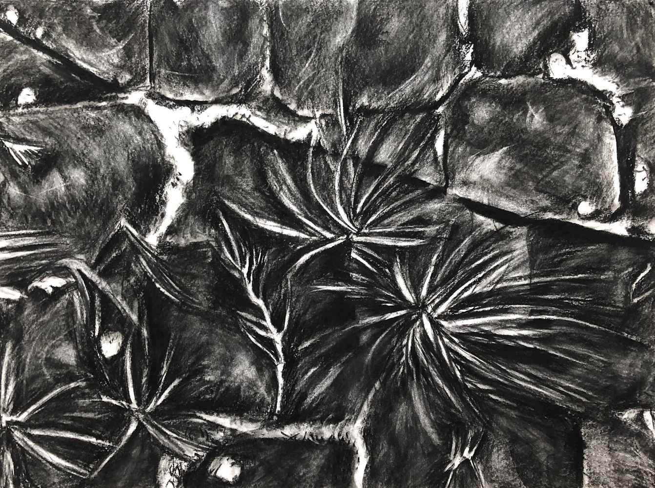 Drawing Urban Botanica 2 by Pamela  Speight