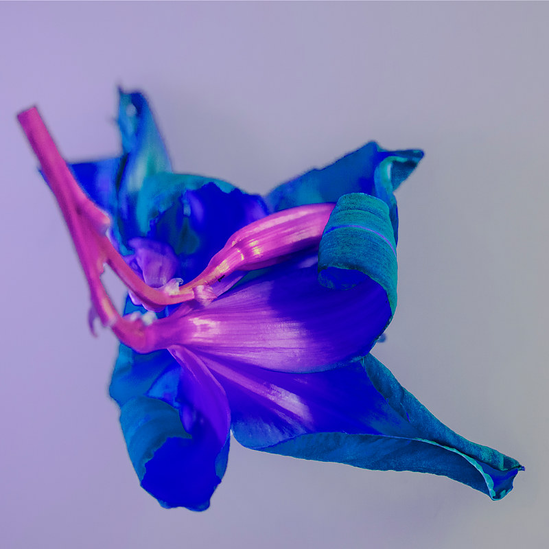 """Alternate Views of Flowers - Old Lily III"" by Hunter Madsen"