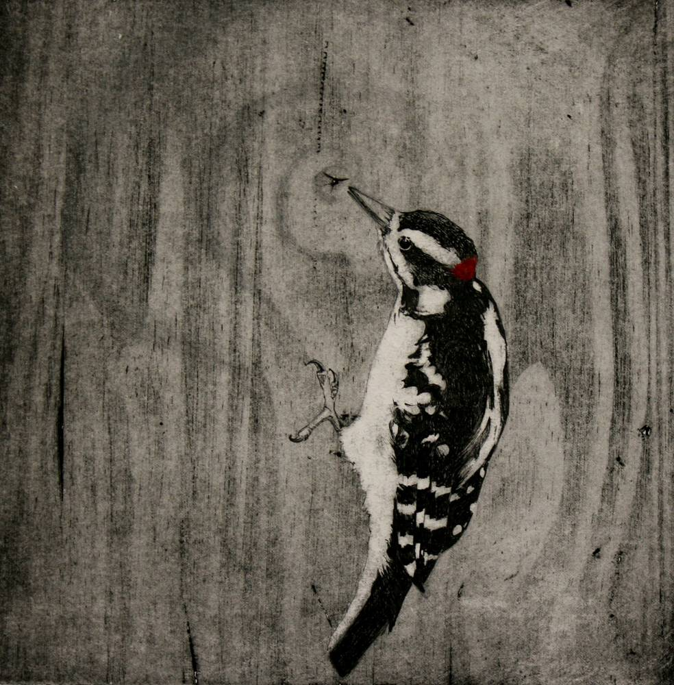 Print Drumming Woodpecker by Nicole Richards