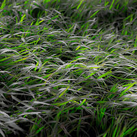 """Rest Area Grasses"" by Hunter Madsen"