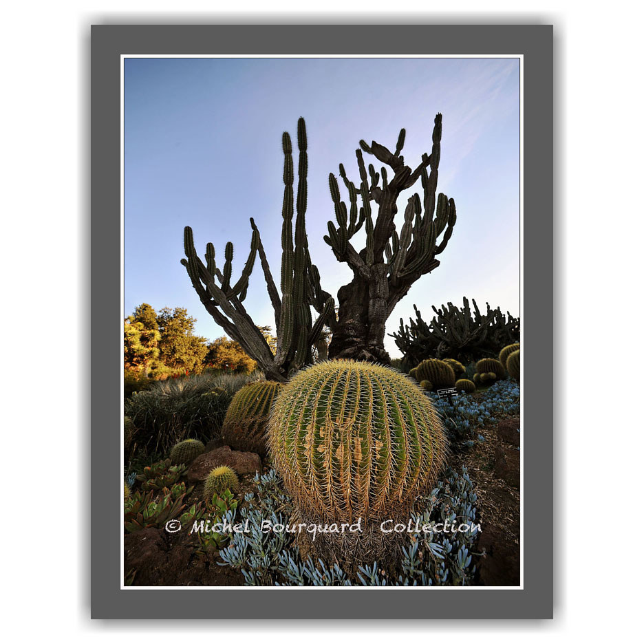 54-cactus in the field by Michel Bourquard