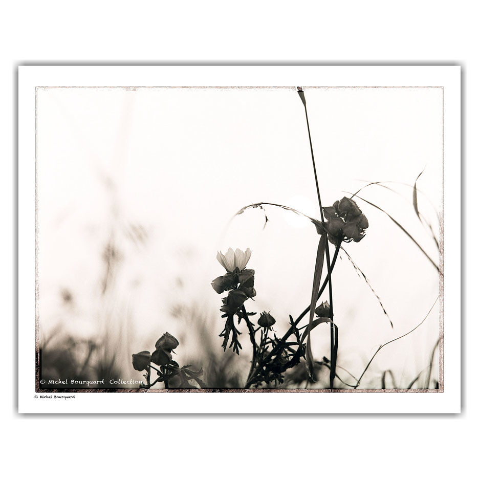 26_Flowers_hazy _light02 by Michel Bourquard