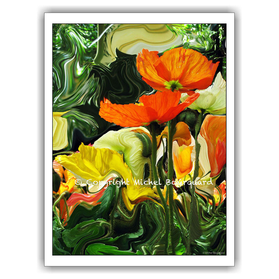 Poppy on Fauvism  by Michel Bourquard