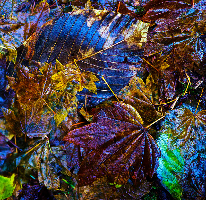 Gilt-Edged Leaves II by Hunter Madsen