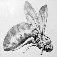 Bee as She May  Graphite 16 x 16 inches (3) by Lully Schwartz