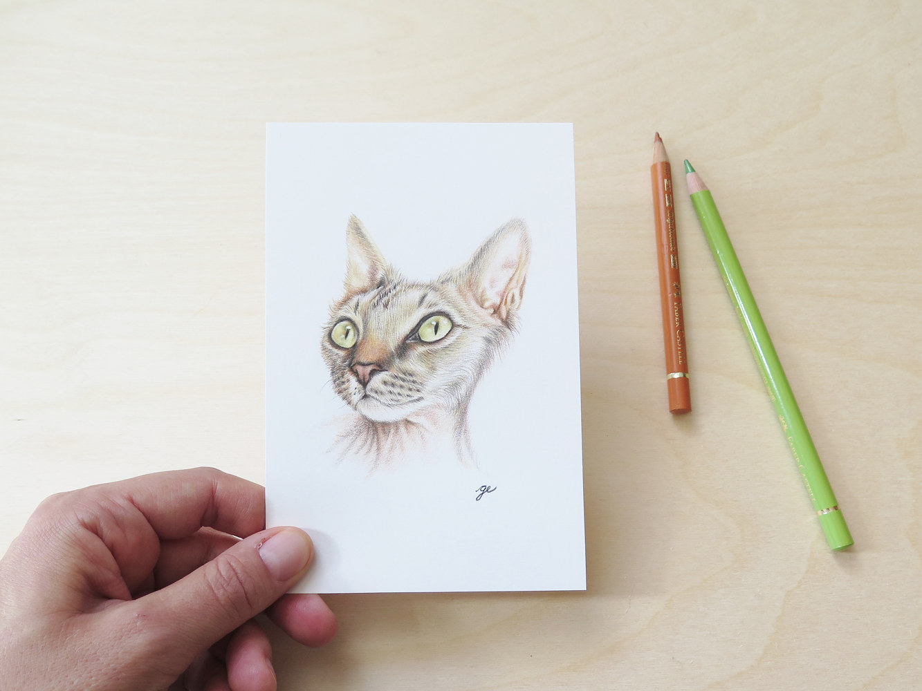 Drawing Dessin original 4x6 - Chat rex by Genevieve Desy