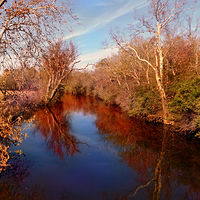 Photography Fall on the Elkhorn by David Neace