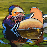 Mandarin Duck by Angelo Mariano