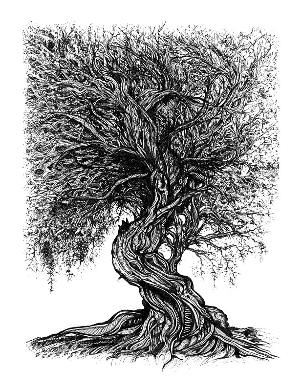 Drawing Branches by Danielle Scott