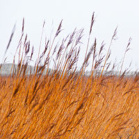 """Nordsee Grasses"" by Hunter Madsen"