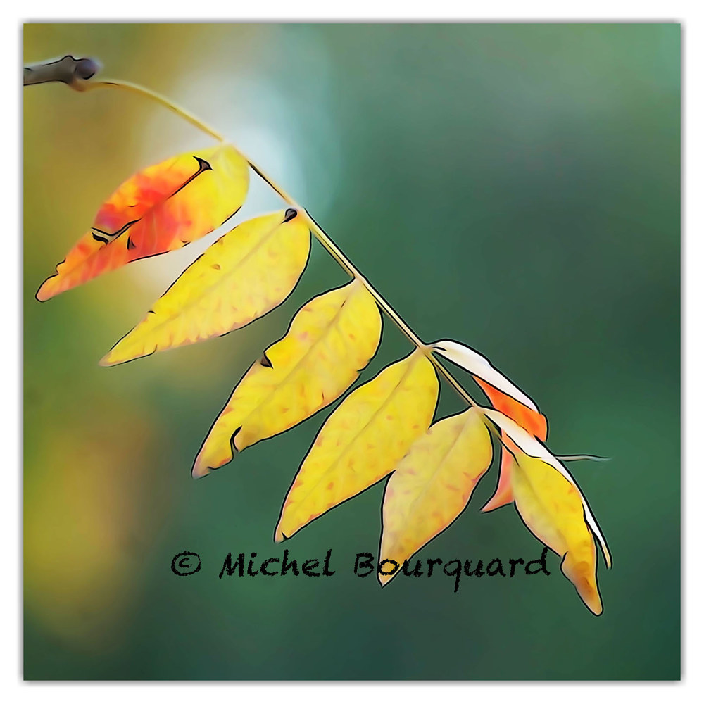 063-Yellow leaves 14x14x300 by Michel Bourquard